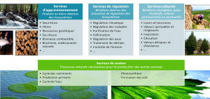 Définition par le Millenium Ecosystem Assessment